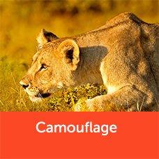 camouflagelion.jpg